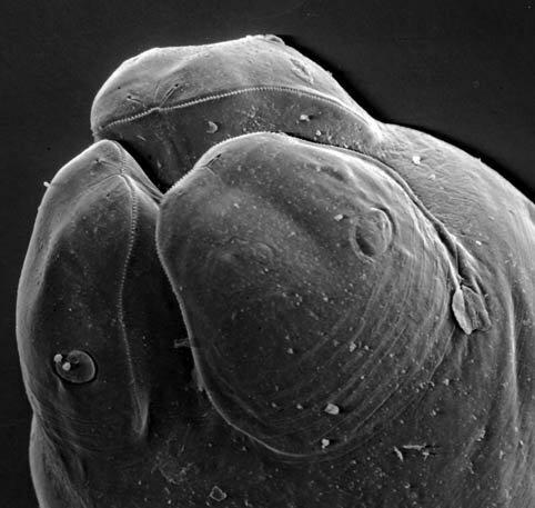 как паразит влияет на организм хозяина