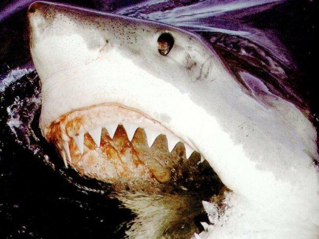 Акулы обычно не слишком агрессивны, но если в воде окажется хоть капля