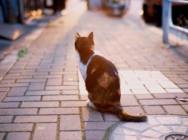 О чем задумывается кошка, сидящая одиноко на тратуаре?  О том, что где-то есть теплый...