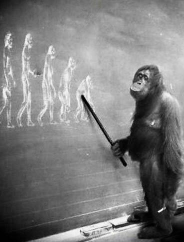 Реформа образования: по следам Адольфа Гитлера